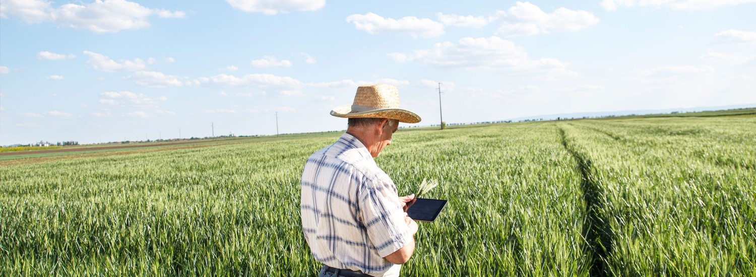 Agribusiness Digital Transformation and Sustainability