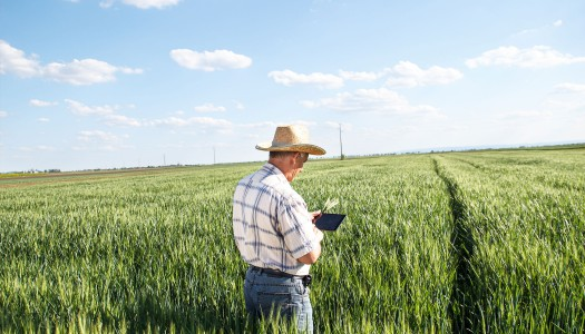 Agribusiness, Digitalization Creates Opportunities to Pursue Sustainability