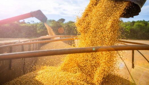 Global Commodity Prices Outlook for 2020